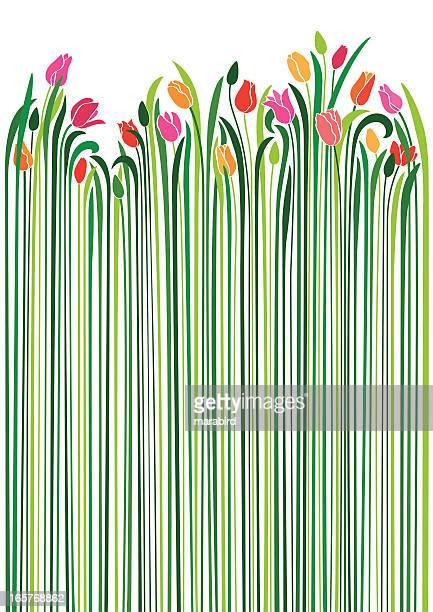 ilustrações, clipart, desenhos animados e ícones de tulipas - flowerbed