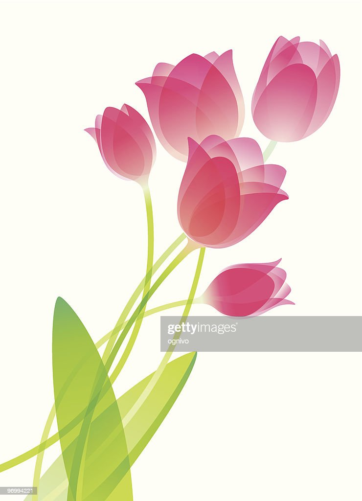 An illustration of watercolor tulips