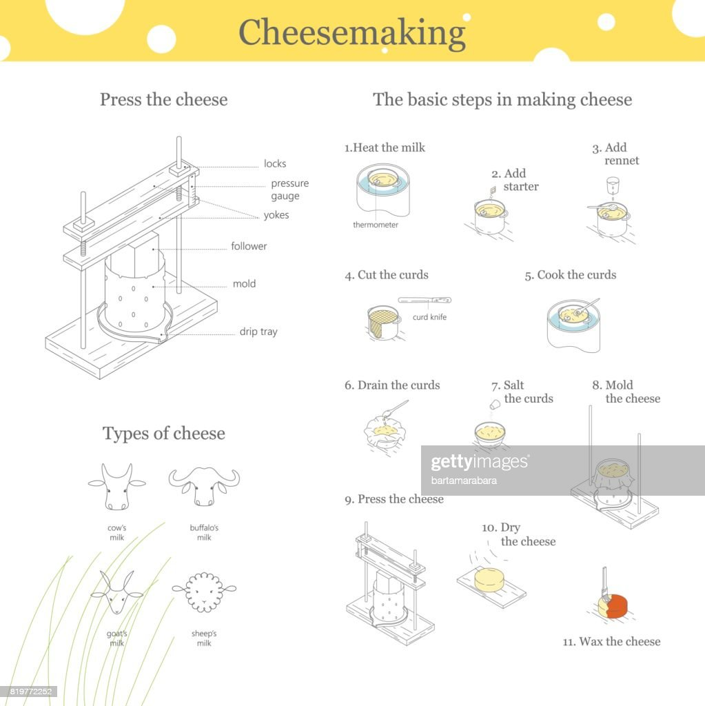 An informative illustration of the classic traditional cheese production process. Press for cheese.