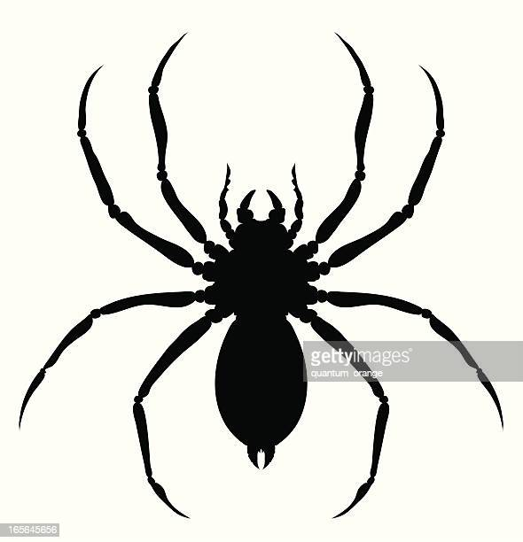 60点の蜘蛛のイラスト素材クリップアート素材マンガ素材アイコン