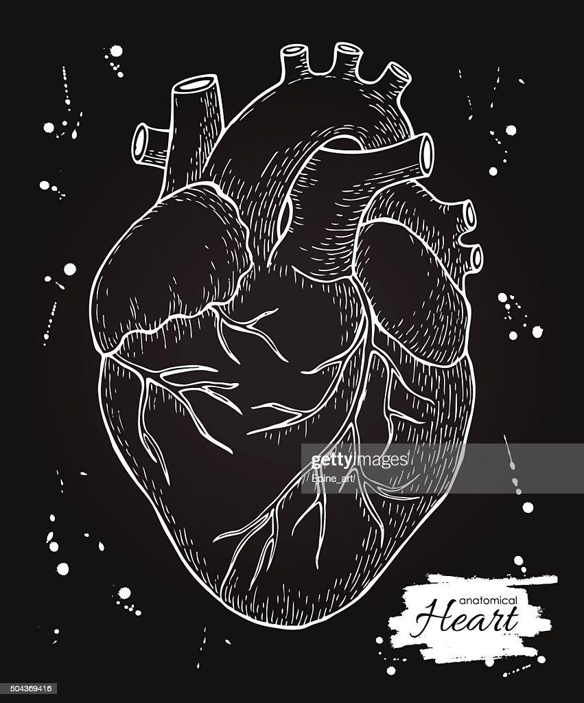Anatomical human heart. Engraved detailed illustration. Hand dra