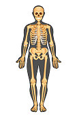 Anatomical structure of human body, presented in of skeleton