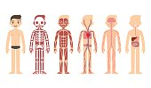 Anatomy diagram (male)
