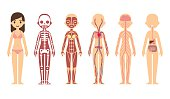 Anatomy diagram (female)