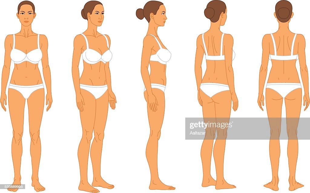 Anatomy Female Human Body Vector Art Getty Images