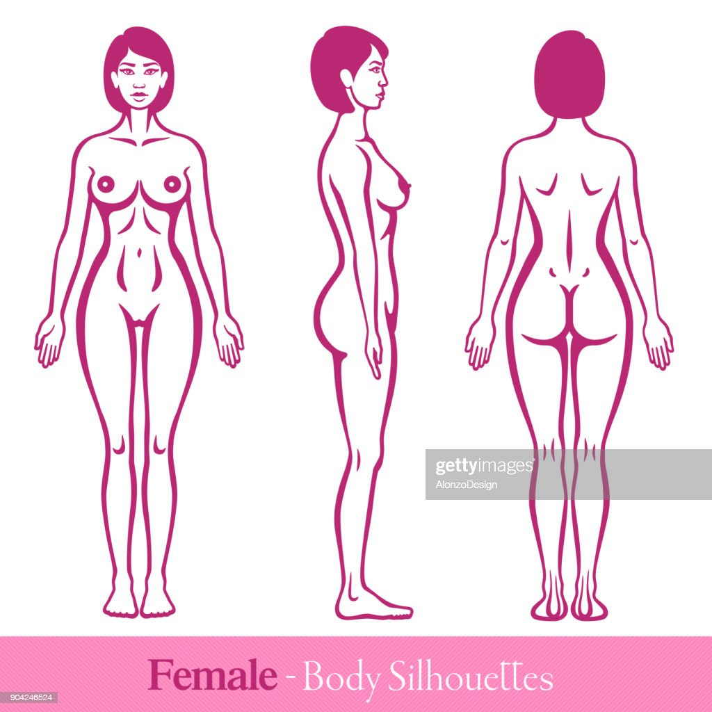 Anatomy Female Human Body Vector Art | Getty Images