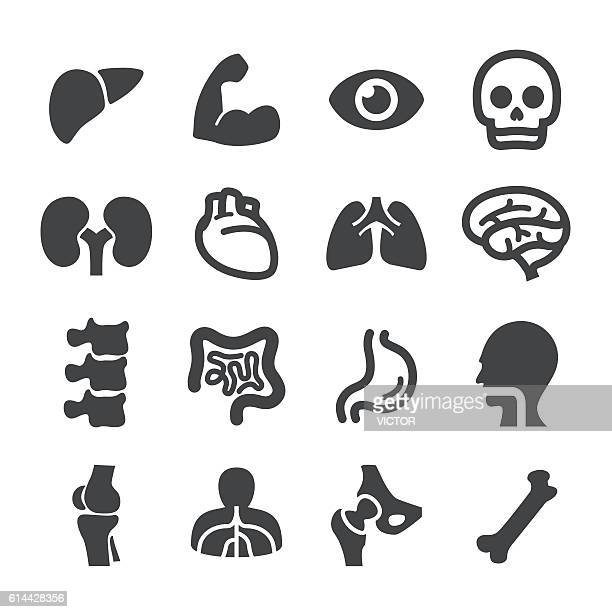 anatomy icons - acme series - digestive system stock illustrations