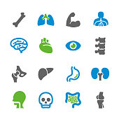 Anatomy Icons - Spry Series