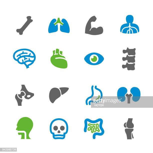 Anatomy Icons - Spry Series