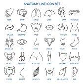 Anatomy line icons