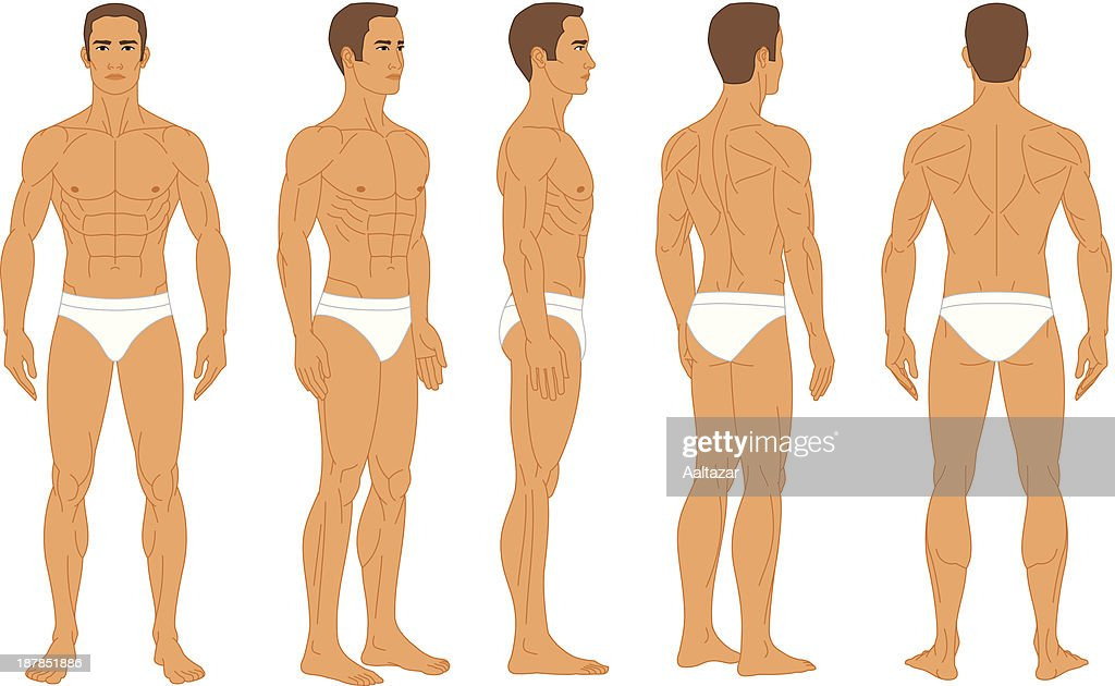 Anatomy Male Human Body Vector Art Getty Images