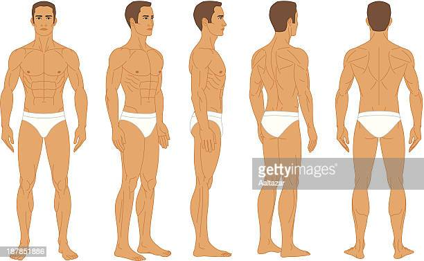 Anatomy - Male Human Body