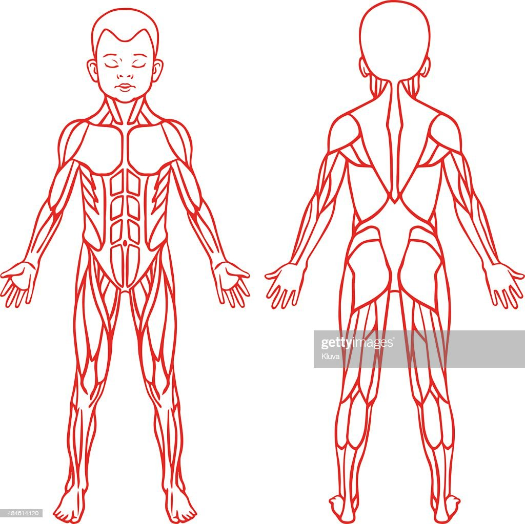 Anatomy Of Children Muscular System Exercise And Muscle Guide Vector ...