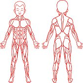 Anatomy of children muscular system, exercise and muscle guide.