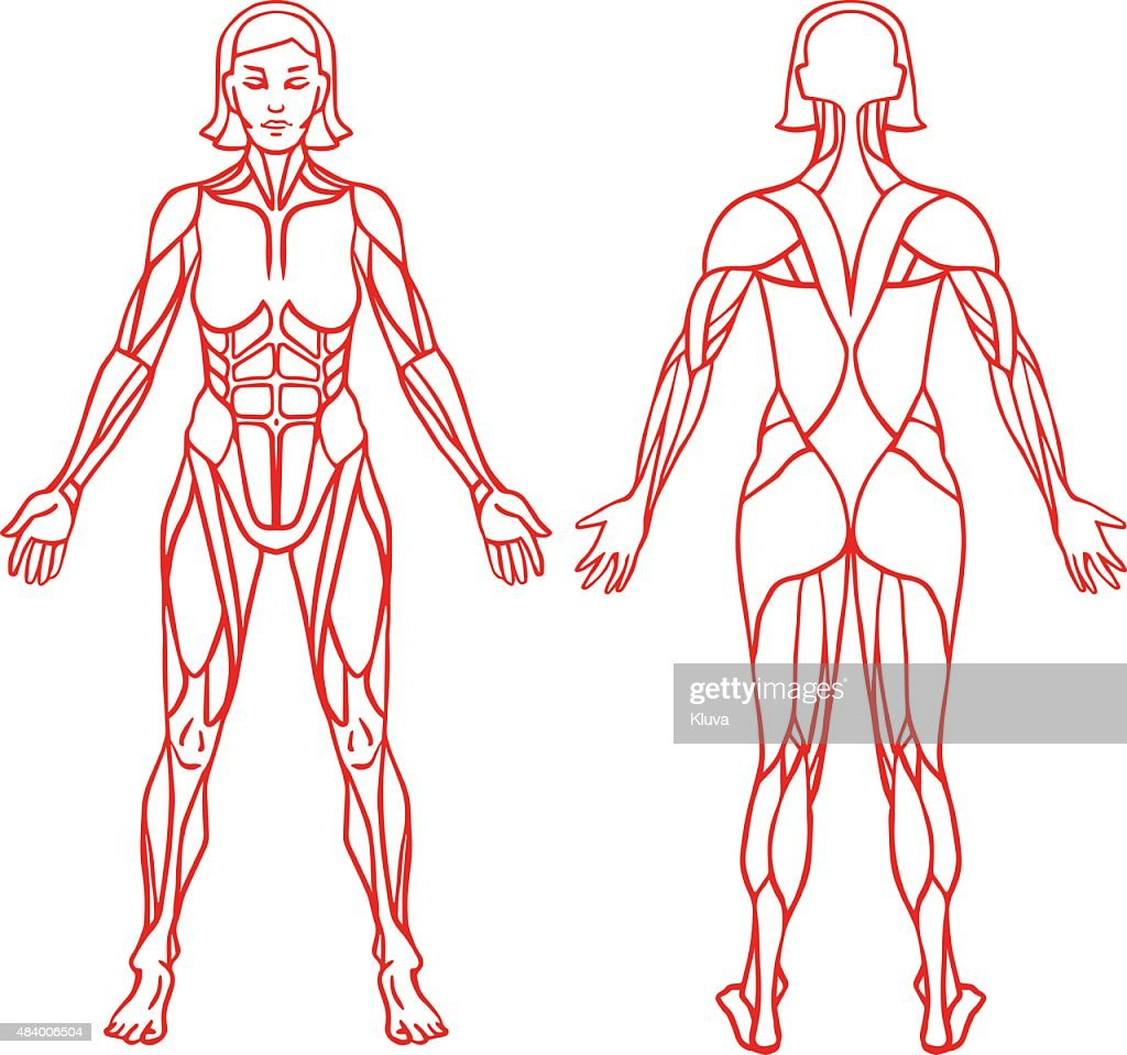 Anatomy of female muscular system, exercise and muscle guide.