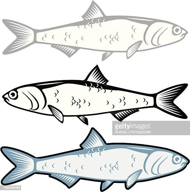 anchovy - fillet stock illustrations, clip art, cartoons, & icons