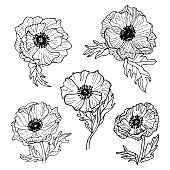 Anemone flowers line art drawing set.