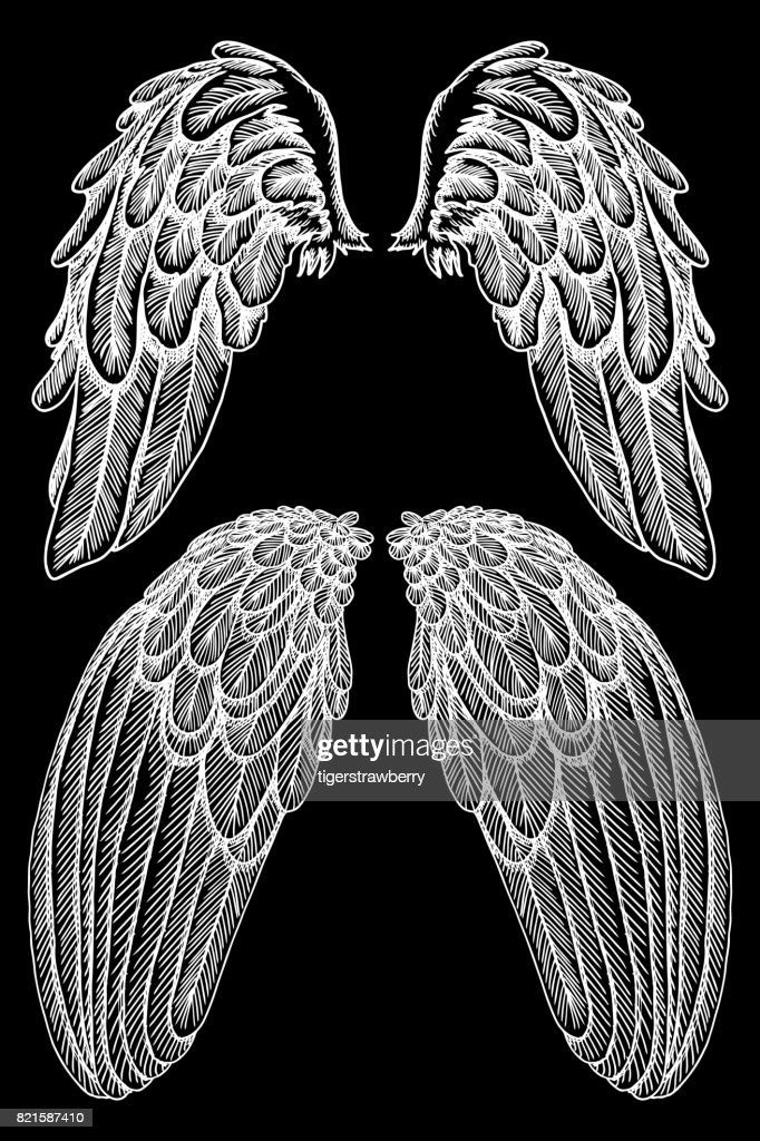 Angel or bird wings set. Sketch isolated vector illustration.