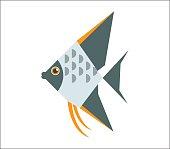 Angelfish flat illustration