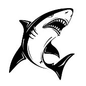 Angry black shark vector illustration isolated on white background