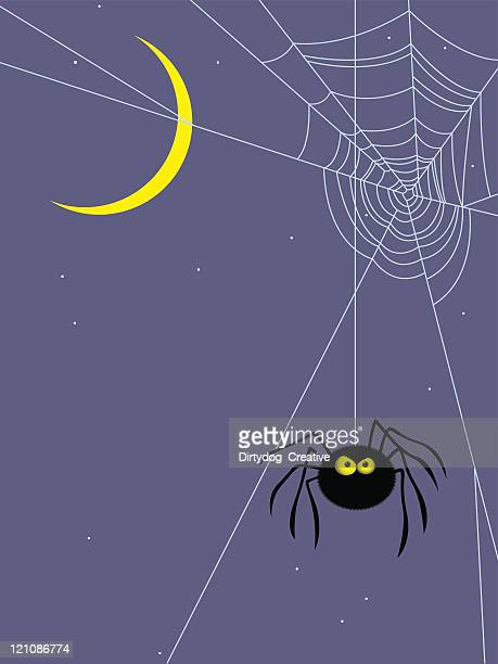 Angry spider hanging about at night