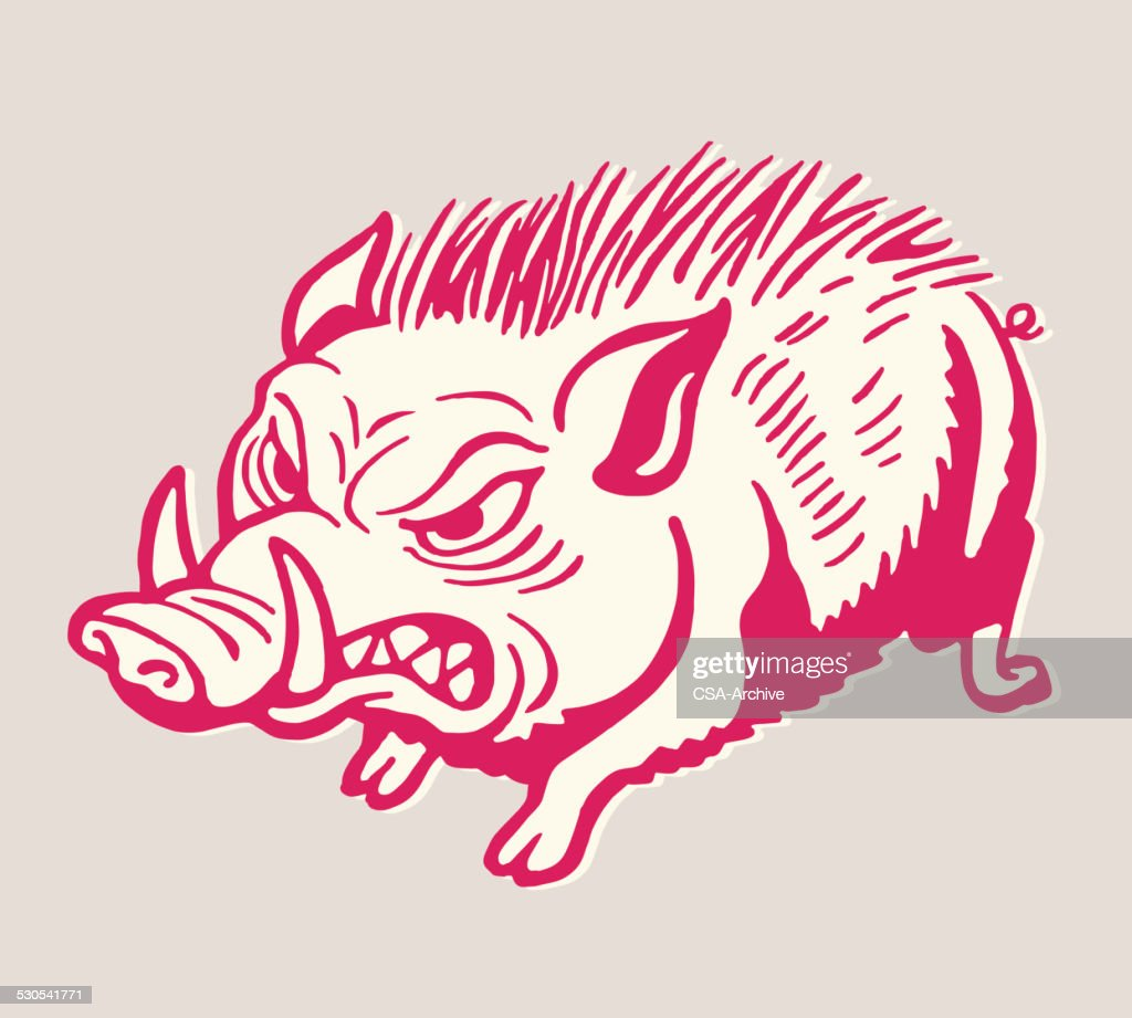 Angry Wild Boar