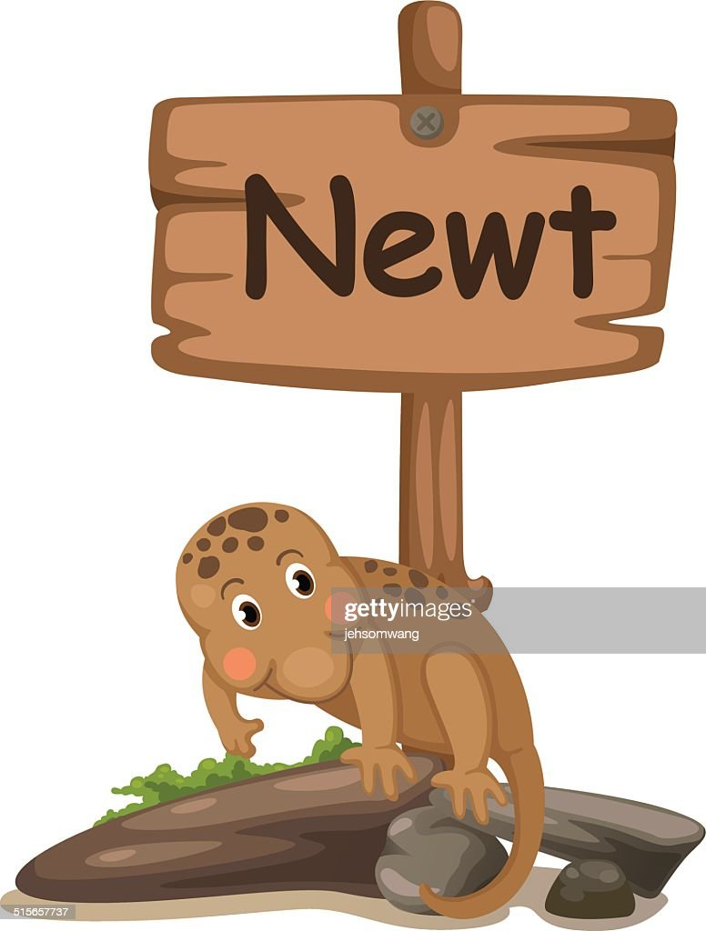 Image of: Isolated Animal Alphabet Letter For Newt Vector Art Getty Images Animal Alphabet Letter For Newt Vector Art Getty Images