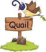 animal alphabet letter Q for quail
