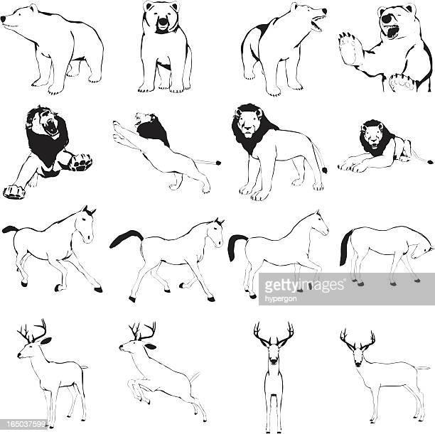 Animal Cartoon Collection (Vector)