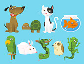 Animal Dog Turtle Cat Fish Parrot Bunny Snake Lizard Mouse