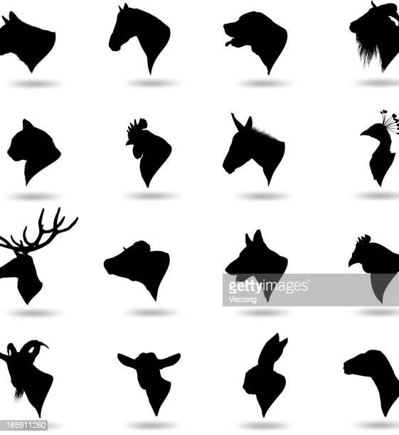 stockillustraties, clipart, cartoons en iconen met animal heads - hoofd