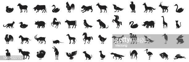 ilustraciones, imágenes clip art, dibujos animados e iconos de stock de silueta animal icono - reptil