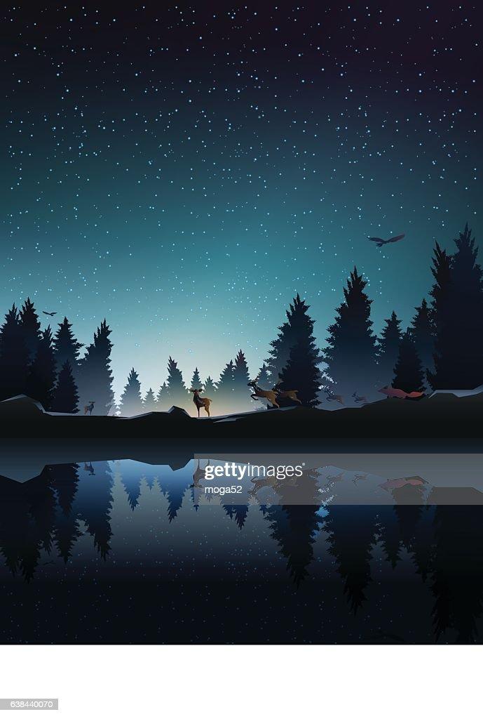 animal in pine wood near lake at night