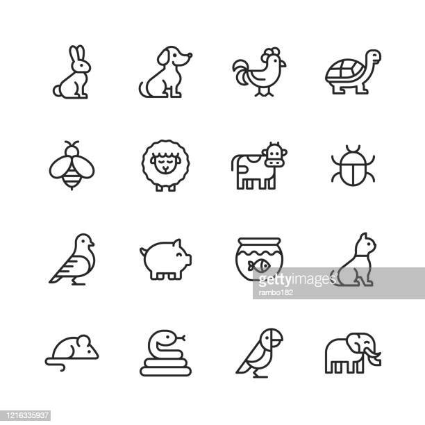 animal line icons. editable stroke. pixel perfect. for mobile and web. contains such icons as rabbit, bunny, dog, chicken, turtle, bee, sheep, cow, pig, cat, snake, mouse, elephant, parrot. - animal themes stock illustrations