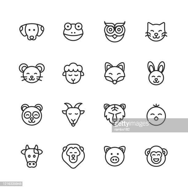 animal line icons. editable stroke. pixel perfect. for mobile and web. contains such icons as dog, frog, owl, bird, cat, kitten, mouse, sheep, fox, bunny, panda, goat, lion, tiger, chick, cow, pig, monkey. - undomesticated cat stock illustrations