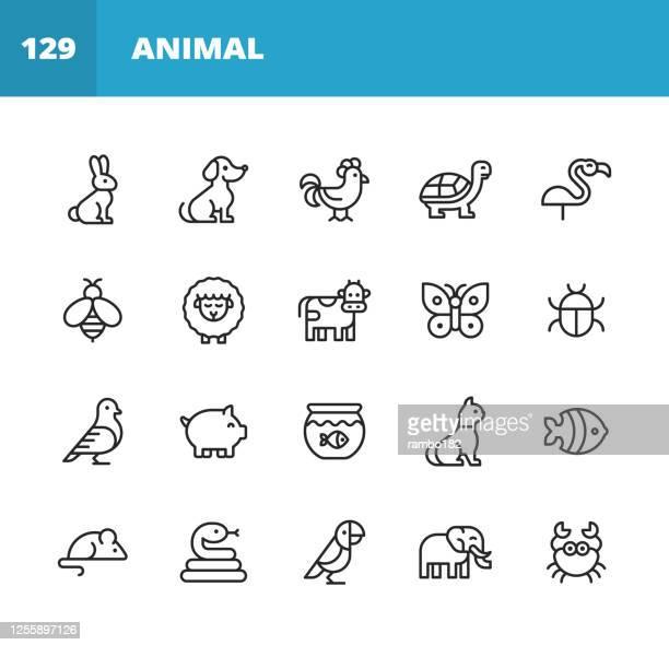 stockillustraties, clipart, cartoons en iconen met dierlijke lijnpictogrammen. bewerkbare lijn. pixel perfect. voor mobiel en web. bevat iconen als konijn, konijn, hond, kip, schildpad, bij, schapen, koe, varken, kat, slang, muis, olifant, papegaai. - gedomesticeerde dieren