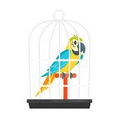 animal pet parrot in birdcage