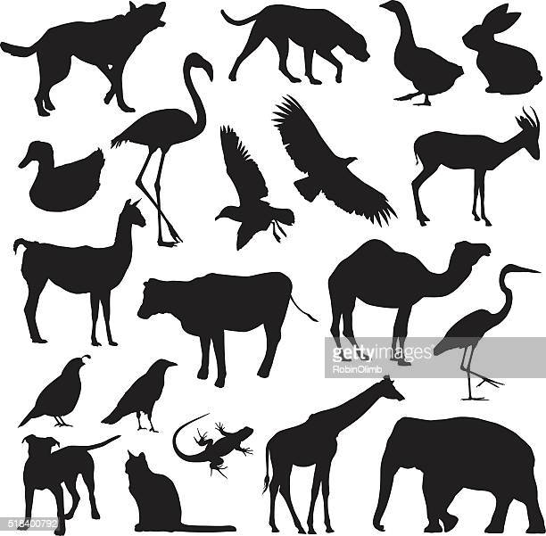 animal silhouettes - quail bird stock illustrations, clip art, cartoons, & icons