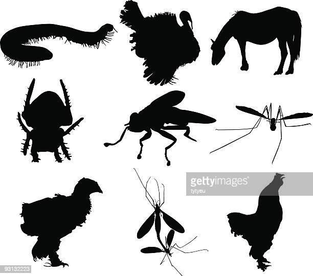 ilustrações de stock, clip art, desenhos animados e ícones de silhuetas de animais - centopeia