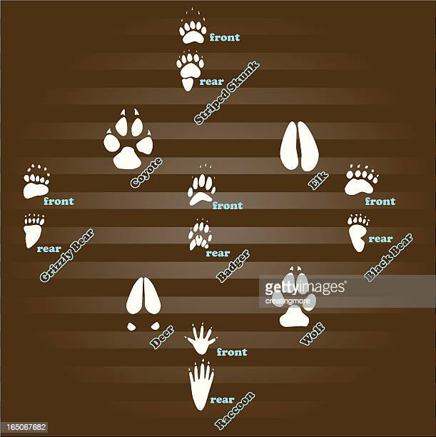 animal tracks - animal track stock illustrations, clip art, cartoons, & icons
