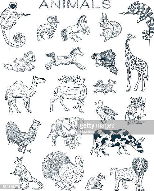 animals doodles - chameleon stock illustrations, clip art, cartoons, & icons