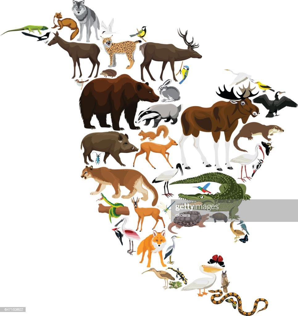 animals North America - vector illustration