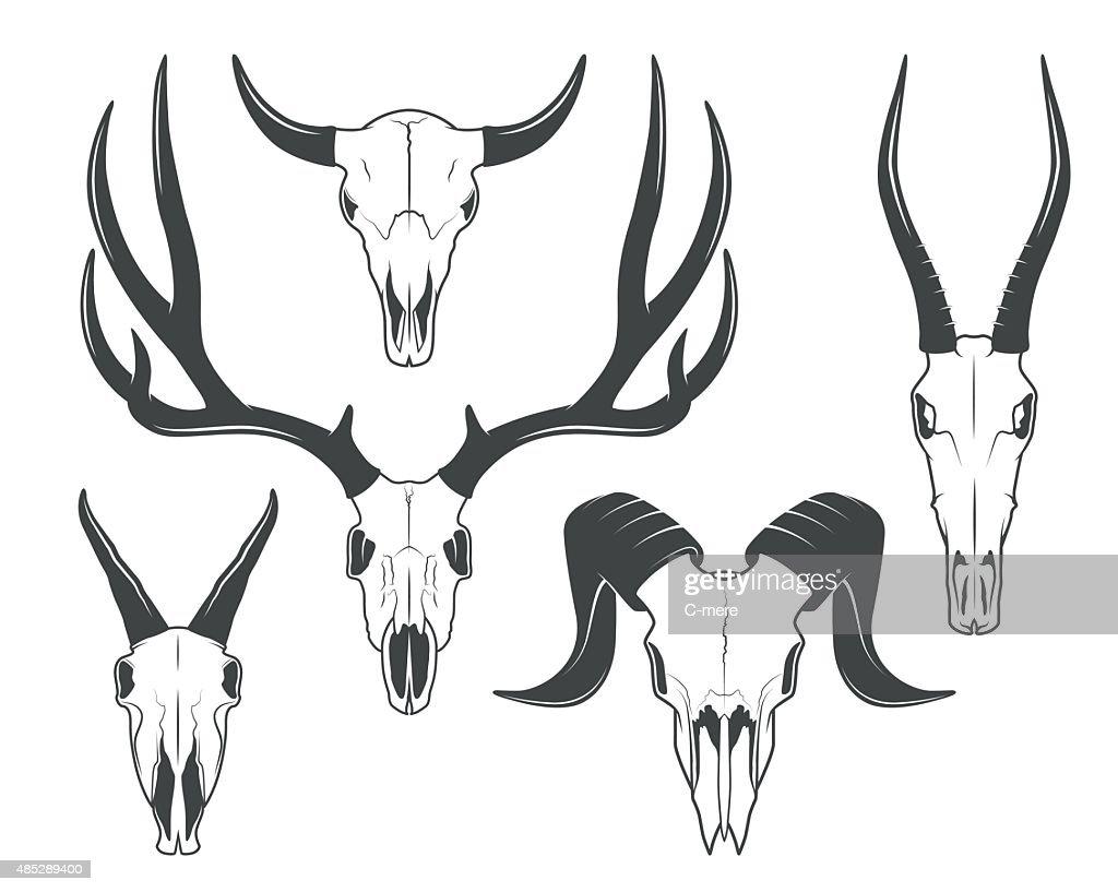 Animals skulls