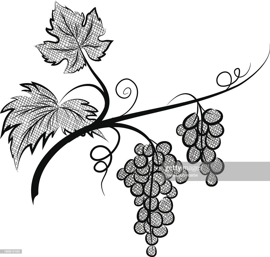 Animated Image Of Grapes On A Grapevine Vector Art | Getty Images for Grapes Animated  21ane