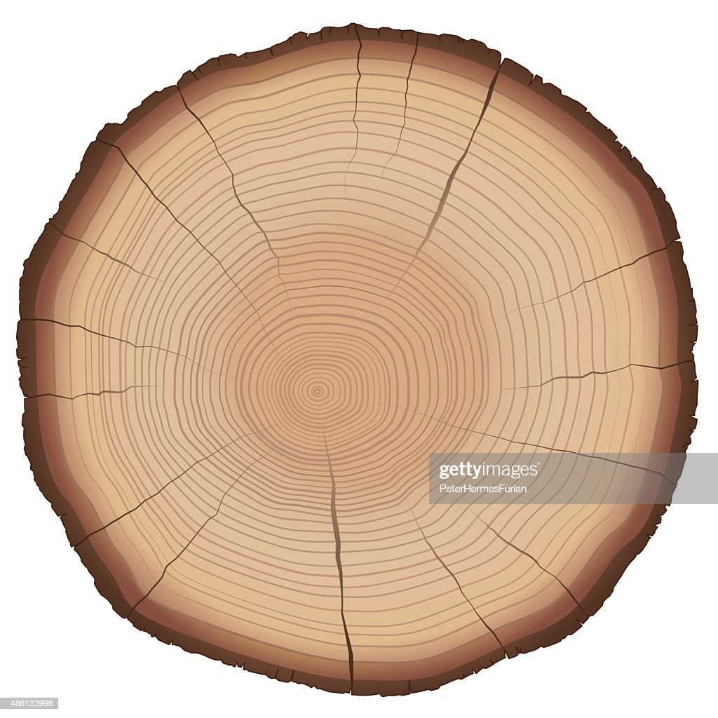 Annual Rings Tree Trunk Cross Section