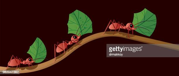 Ant and Amazan forest