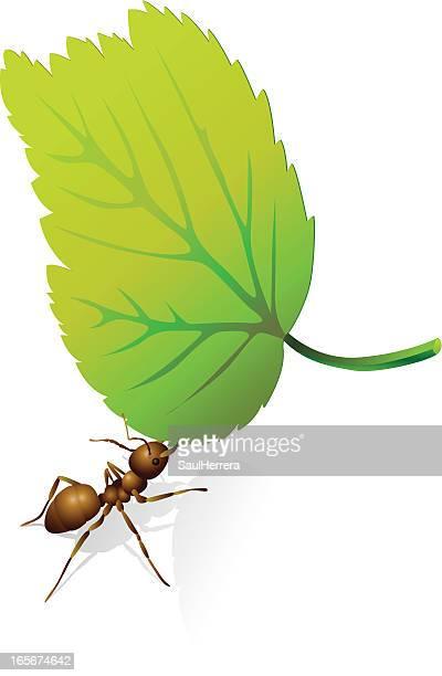 ilustraciones, imágenes clip art, dibujos animados e iconos de stock de ant y hoja - hormiga