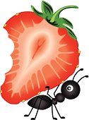 Ant Carrying Strawberry Sliced