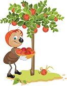 Ant Gardener gather apples. Apple tree, red ripe apples. Orchard