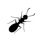 Ant sign black on white